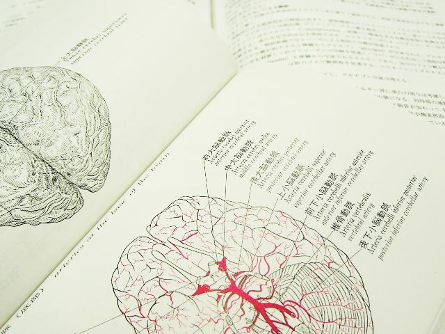 高次脳機能障害の後遺障害(交通事故)のイメージ
